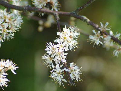 Der Frühling und sein Duft